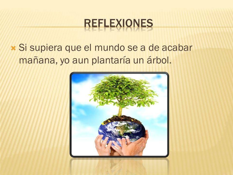 Si supiera que el mundo se a de acabar mañana, yo aun plantaría un árbol.