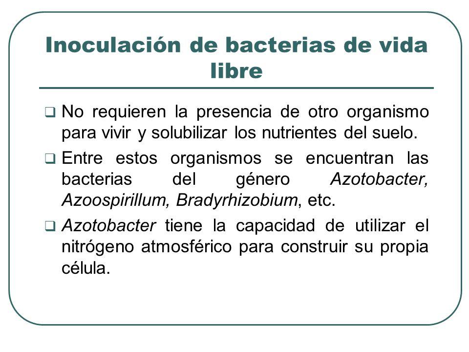 Inoculación de bacterias de vida libre No requieren la presencia de otro organismo para vivir y solubilizar los nutrientes del suelo.