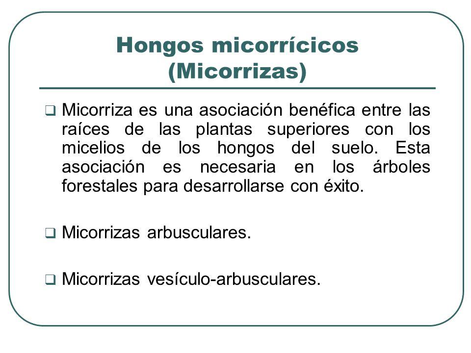 Hongos micorrícicos (Micorrizas) Micorriza es una asociación benéfica entre las raíces de las plantas superiores con los micelios de los hongos del suelo.