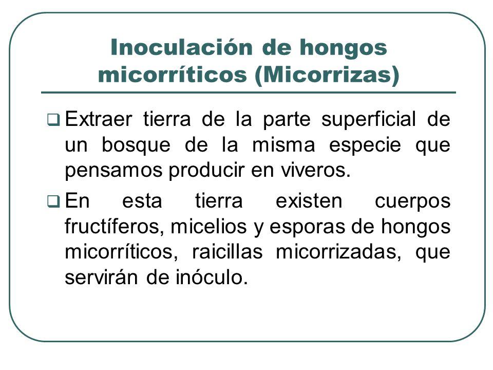 Inoculación de hongos micorríticos (Micorrizas) Extraer tierra de la parte superficial de un bosque de la misma especie que pensamos producir en viver