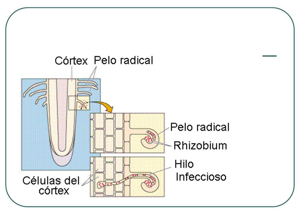 ACTIVADOR DE SUELOS Contribuye a la recuperación de los suelos.