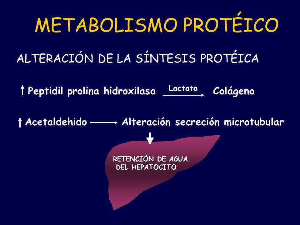 METABOLISMO PROTÉICO ALTERACIÓN DE LA SÍNTESIS PROTÉICA Peptidil prolina hidroxilasa Lactato Colágeno Acetaldehido Alteración secreción microtubular R