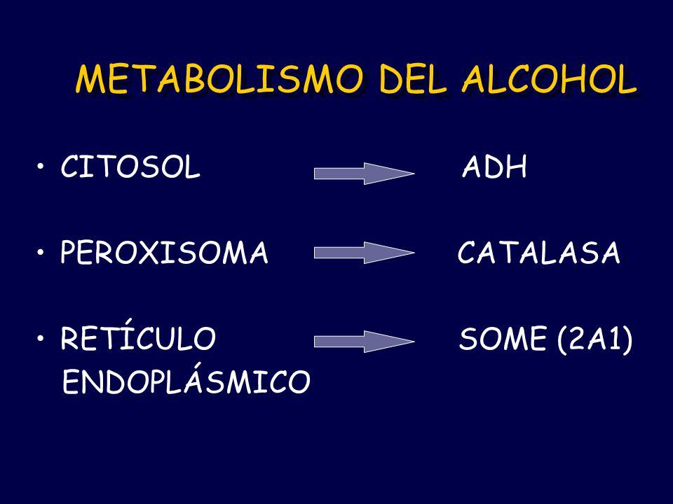 METABOLISMO DEL ALCOHOL CITOSOL ADH PEROXISOMA CATALASA RETÍCULO SOME (2A1) ENDOPLÁSMICO