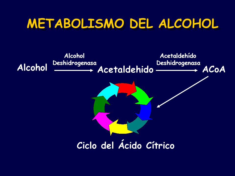 METABOLISMO DEL ALCOHOL Alcohol Acetaldehido ACoA Alcohol Deshidrogenasa Acetaldehído Deshidrogenasa Ciclo del Ácido Cítrico