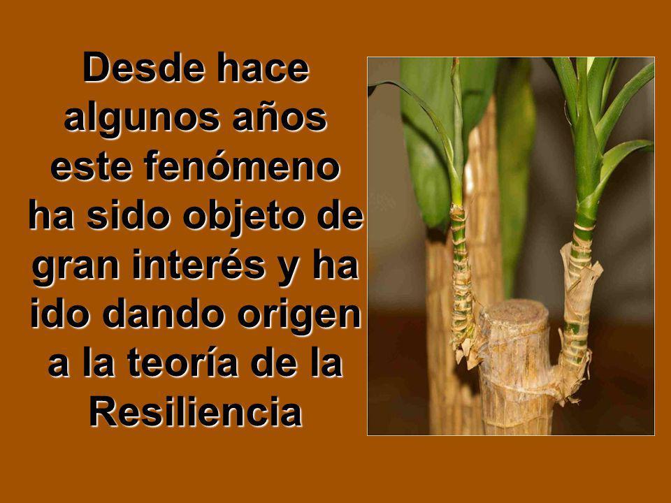 Desde hace algunos años este fenómeno ha sido objeto de gran interés y ha ido dando origen a la teoría de la Resiliencia