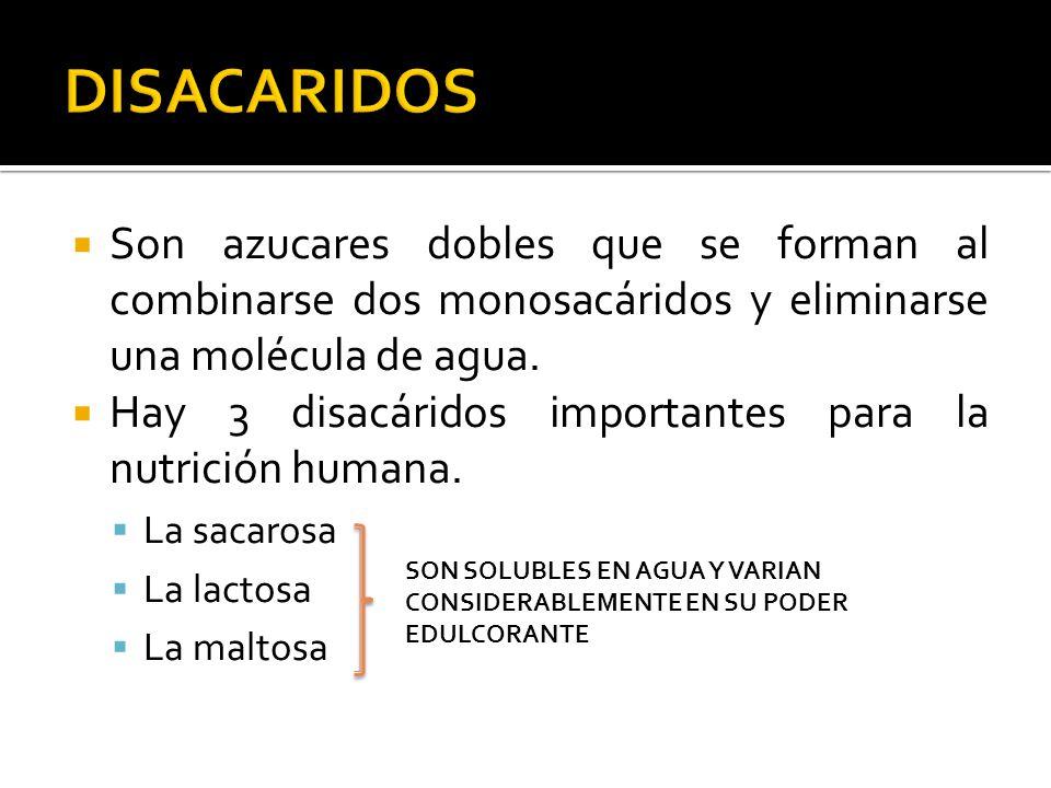 Son azucares dobles que se forman al combinarse dos monosacáridos y eliminarse una molécula de agua. Hay 3 disacáridos importantes para la nutrición h