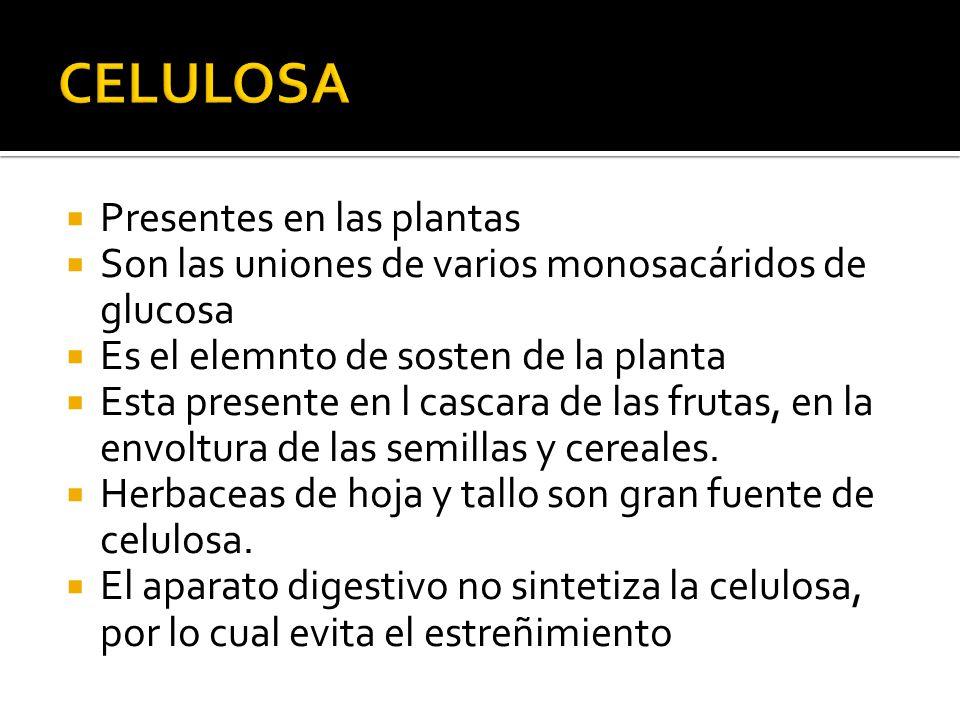 Presentes en las plantas Son las uniones de varios monosacáridos de glucosa Es el elemnto de sosten de la planta Esta presente en l cascara de las fru