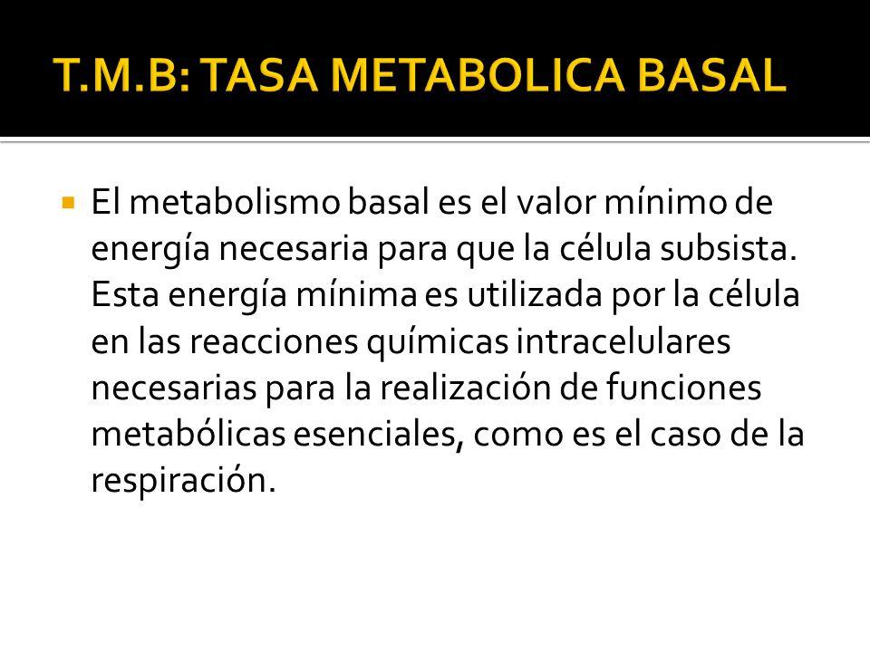 El metabolismo basal es el valor mínimo de energía necesaria para que la célula subsista. Esta energía mínima es utilizada por la célula en las reacci