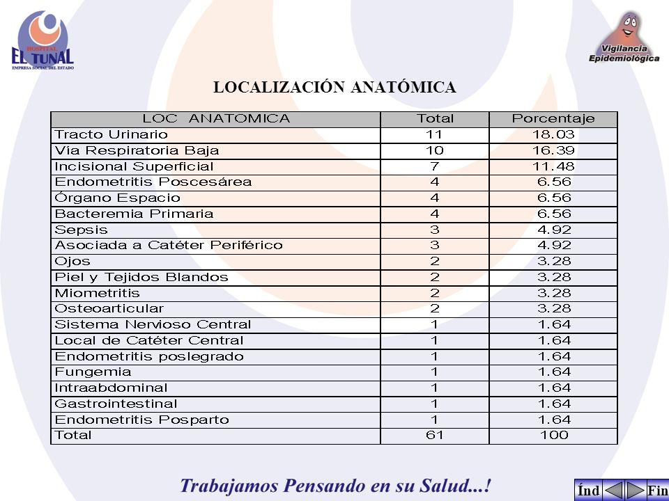 LOCALIZACIÓN ANATÓMICA FinÍnd