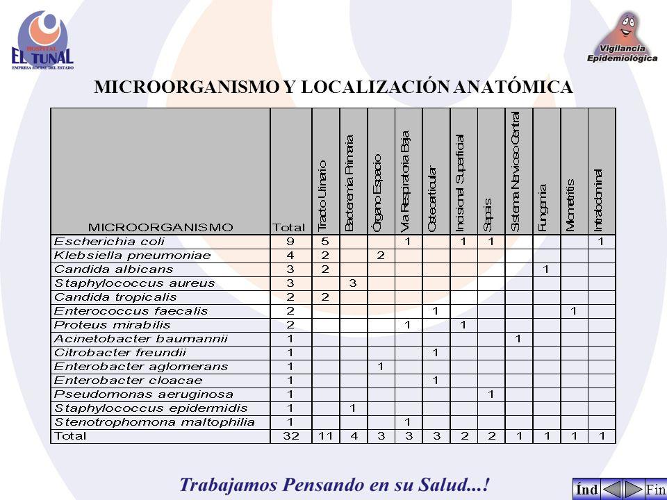 MICROORGANISMO Y LOCALIZACIÓN ANATÓMICA FinÍnd