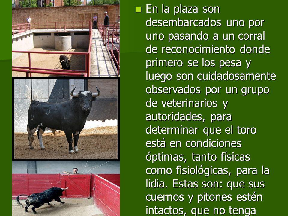 LA MUERTE DEL TORO A diferencia de otros animales el toro de lidia tiene la posibilidad de defenderse e incluso ser indultado.