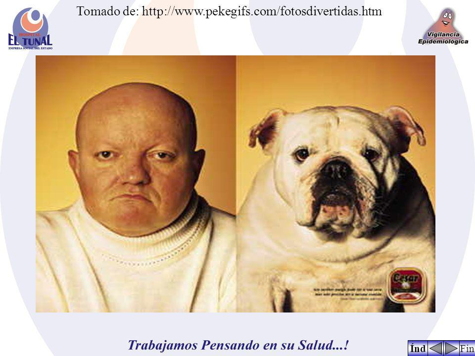 FinÍnd Tomado de: http://www.pekegifs.com/fotosdivertidas.htm