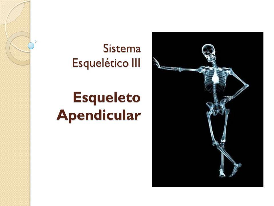 Sistema Esquelético III Esqueleto Apendicular