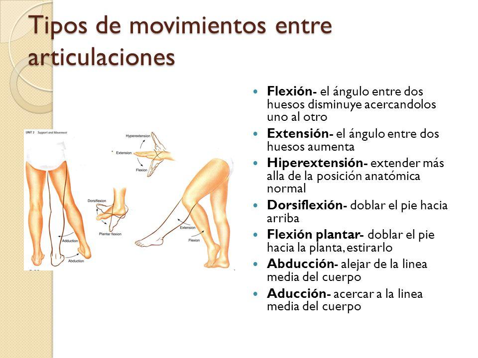 Tipos de movimientos entre articulaciones Flexión- el ángulo entre dos huesos disminuye acercandolos uno al otro Extensión- el ángulo entre dos huesos aumenta Hiperextensión- extender más alla de la posición anatómica normal Dorsiflexión- doblar el pie hacia arriba Flexión plantar- doblar el pie hacia la planta, estirarlo Abducción- alejar de la linea media del cuerpo Aducción- acercar a la linea media del cuerpo