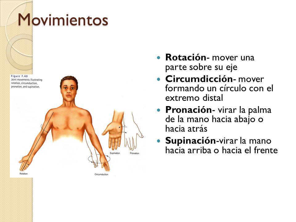 Movimientos Rotación- mover una parte sobre su eje Circumdicción- mover formando un círculo con el extremo distal Pronación- virar la palma de la mano hacia abajo o hacia atrás Supinación-virar la mano hacia arriba o hacia el frente