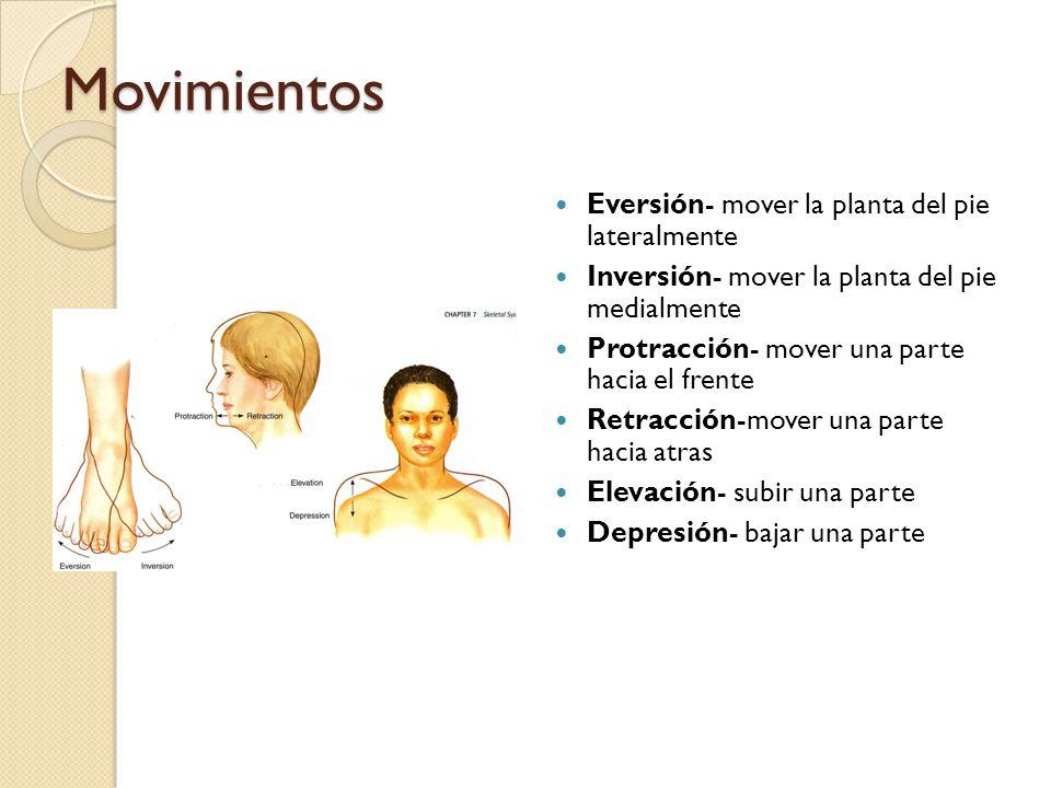Movimientos Eversión- mover la planta del pie lateralmente Inversión- mover la planta del pie medialmente Protracción- mover una parte hacia el frente