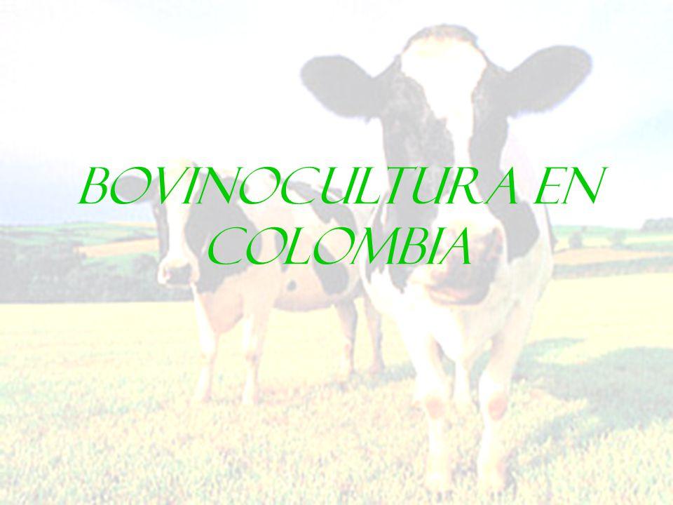 Factores influyentes Políticas agropecuarias Políticas ambientales No oportunidades agroforesteria Castigan impacto ambiental sin ofrecer alternativas