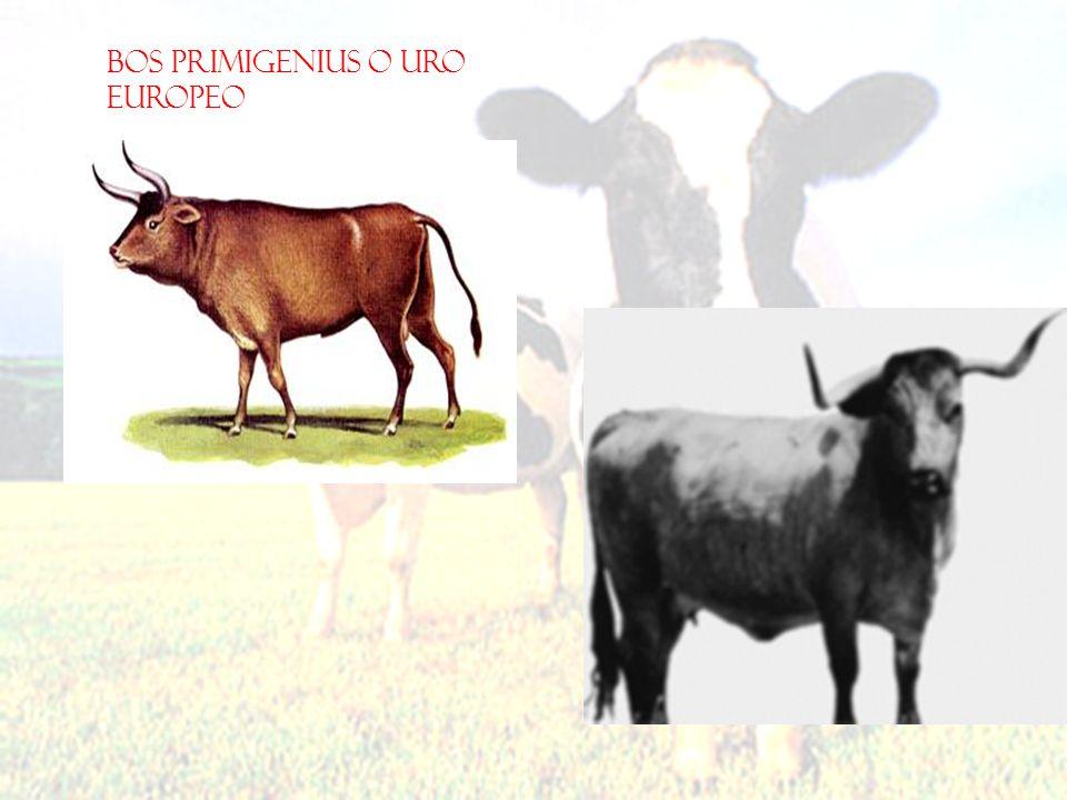 Análisis de bovinocultura en Colombia VENTAJAS Precipitación Clima Altura Variabilidad