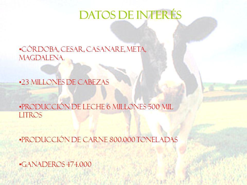 Córdoba, Cesar, Casanare, Meta, Magdalena. 23 millones de cabezas Producción de leche 6 millones 500 mil litros Producción de carne 800.000 toneladas