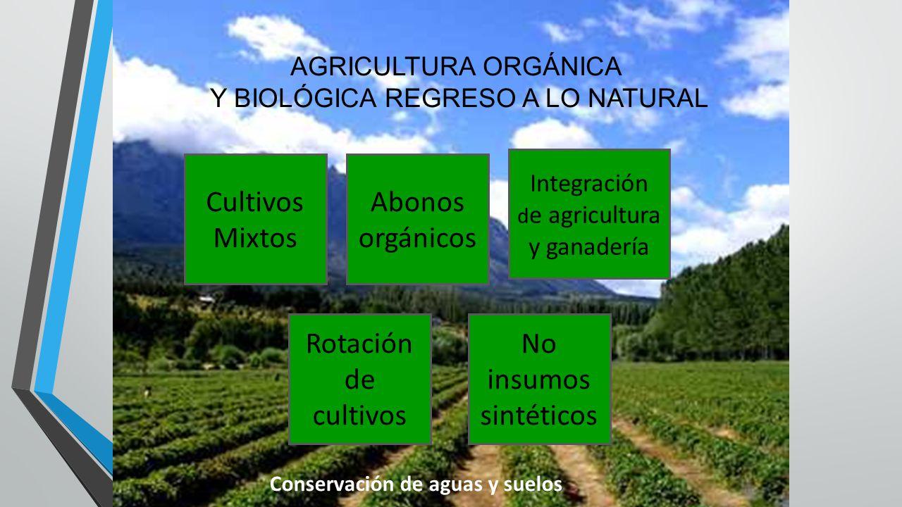 AGRICULTURA ORGÁNICA Y BIOLÓGICA REGRESO A LO NATURAL Cultivos Mixtos Abonos orgánicos Integración d e agricultura y ganadería Rotación de cultivos No