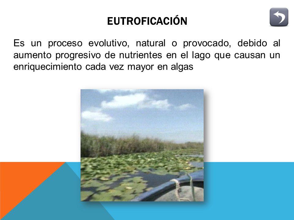 EFECTOS SOBRE LOS PECES Y LA VIDA SILVESTRE Las represas causan diversas perturbaciones sobre las poblaciones de peces como: Disminución de la producción Desadaptación (alteración de la temperatura, iluminación, velocidad y cantidad de oxigeno, disueltos en el agua)