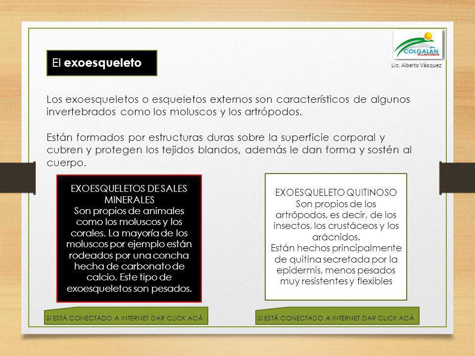 El exoesqueleto Los exoesqueletos o esqueletos externos son característicos de algunos invertebrados como los moluscos y los artrópodos. Están formado