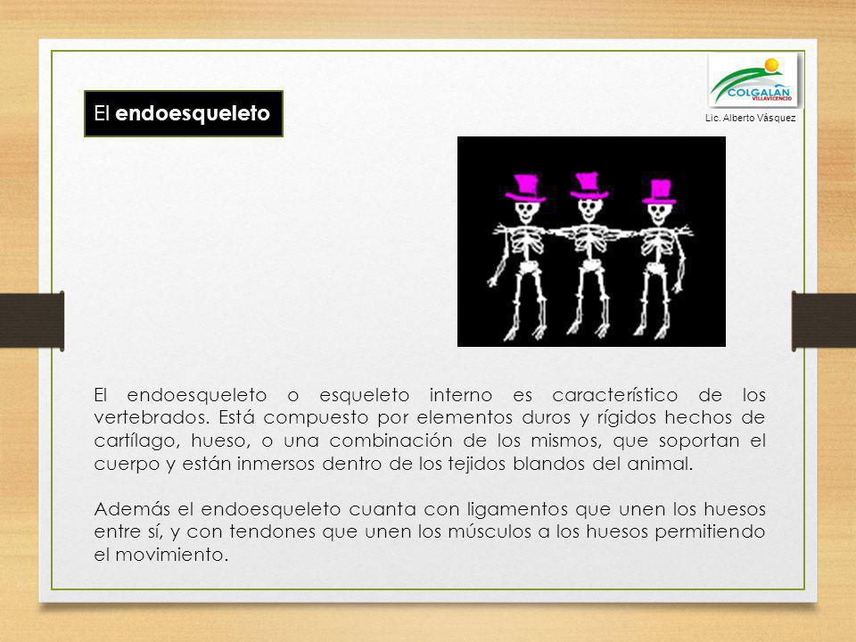 El endoesqueleto El endoesqueleto o esqueleto interno es característico de los vertebrados. Está compuesto por elementos duros y rígidos hechos de car
