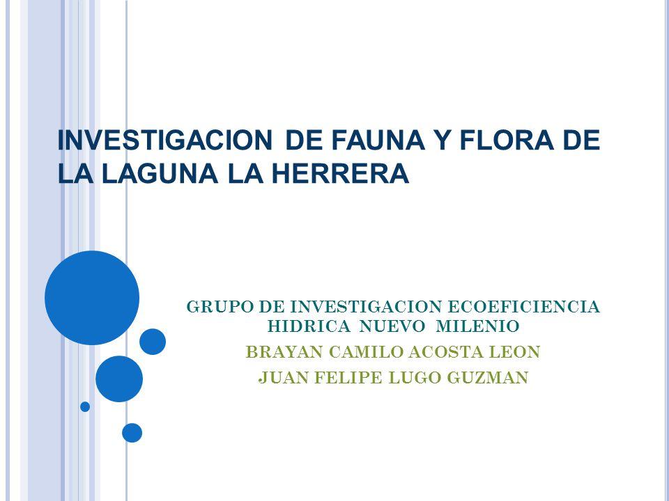INVESTIGACION DE FAUNA Y FLORA DE LA LAGUNA LA HERRERA GRUPO DE INVESTIGACION ECOEFICIENCIA HIDRICA NUEVO MILENIO BRAYAN CAMILO ACOSTA LEON JUAN FELIPE LUGO GUZMAN