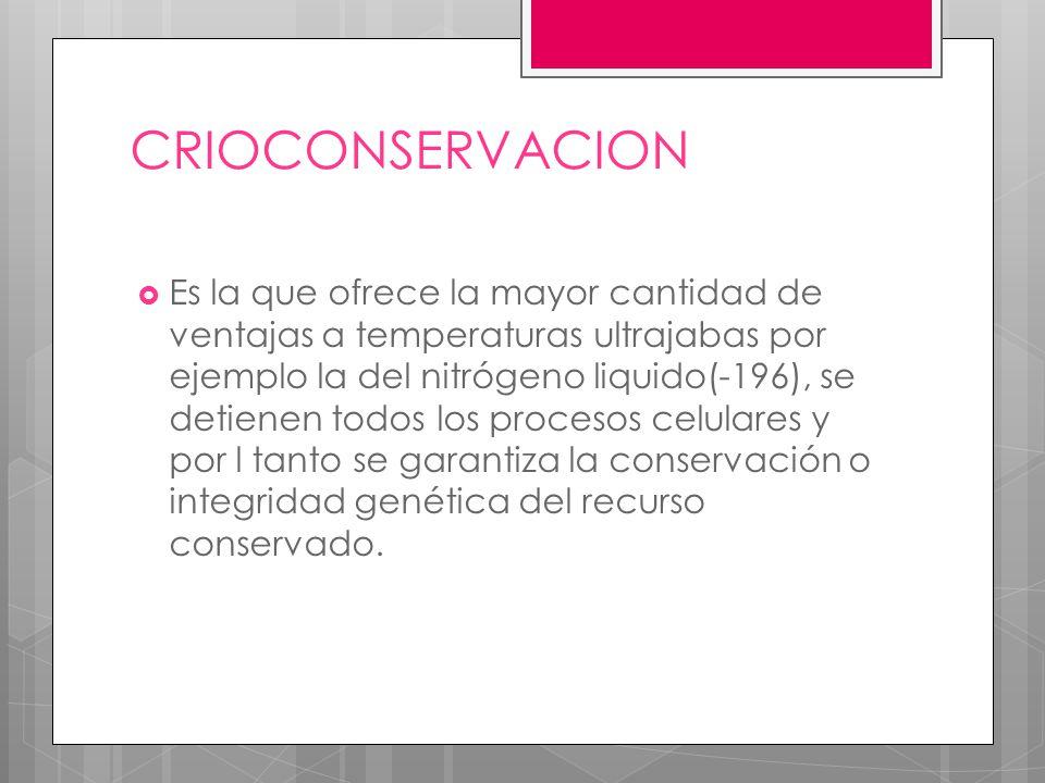 CRIOCONSERVACION Es la que ofrece la mayor cantidad de ventajas a temperaturas ultrajabas por ejemplo la del nitrógeno liquido(-196), se detienen todos los procesos celulares y por l tanto se garantiza la conservación o integridad genética del recurso conservado.