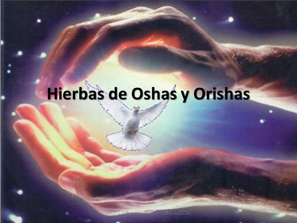 Hierbas de Oshas y Orishas Santeira Maior - OBA ADDA