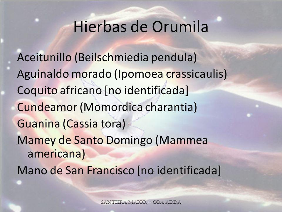 Hierbas de Orumila Aceitunillo (Beilschmiedia pendula) Aguinaldo morado (Ipomoea crassicaulis) Coquito africano [no identificada] Cundeamor (Momordica charantia) Guanina (Cassia tora) Mamey de Santo Domingo (Mammea americana) Mano de San Francisco [no identificada] Santeira Maior - OBA ADDA