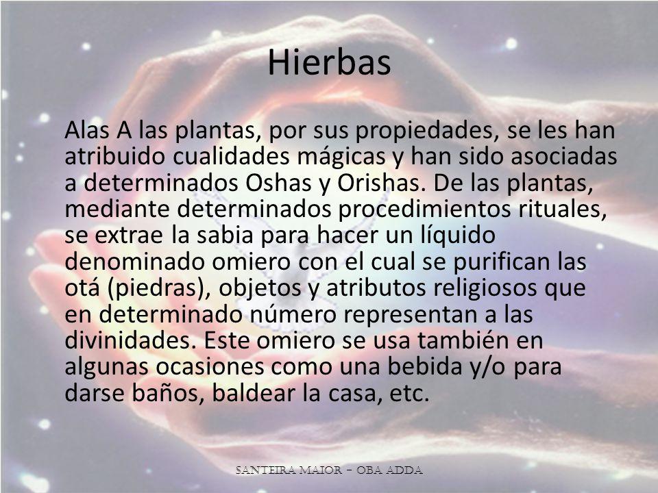 Hierbas Alas A las plantas, por sus propiedades, se les han atribuido cualidades mágicas y han sido asociadas a determinados Oshas y Orishas.