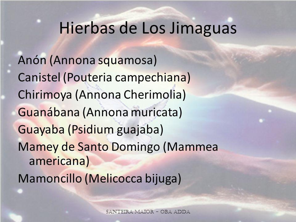 Hierbas de Los Jimaguas Anón (Annona squamosa) Canistel (Pouteria campechiana) Chirimoya (Annona Cherimolia) Guanábana (Annona muricata) Guayaba (Psidium guajaba) Mamey de Santo Domingo (Mammea americana) Mamoncillo (Melicocca bijuga) Santeira Maior - OBA ADDA