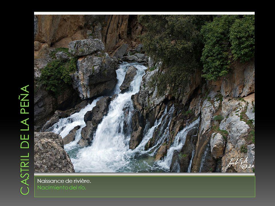 Naissance de rivière. Nacimiento del río.