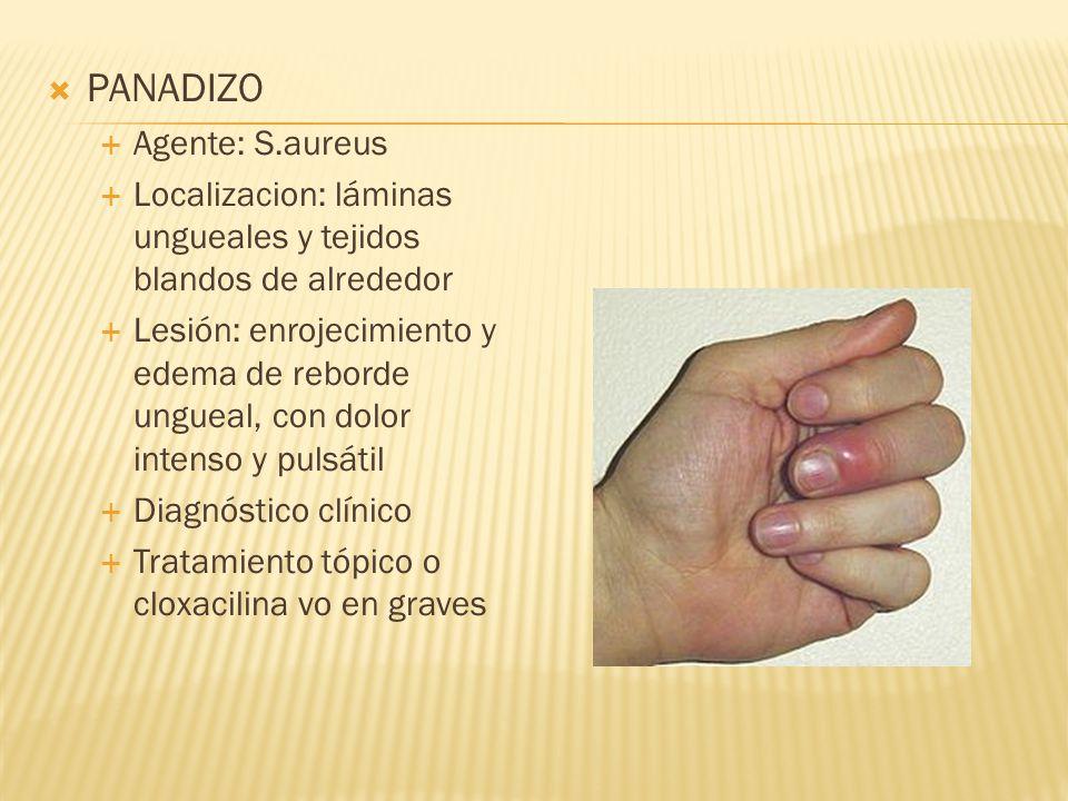  PANADIZO  Agente: S.aureus  Localizacion: láminas ungueales y tejidos blandos de alrededor  Lesión: enrojecimiento y edema de reborde ungueal, con dolor intenso y pulsátil  Diagnóstico clínico  Tratamiento tópico o cloxacilina vo en graves