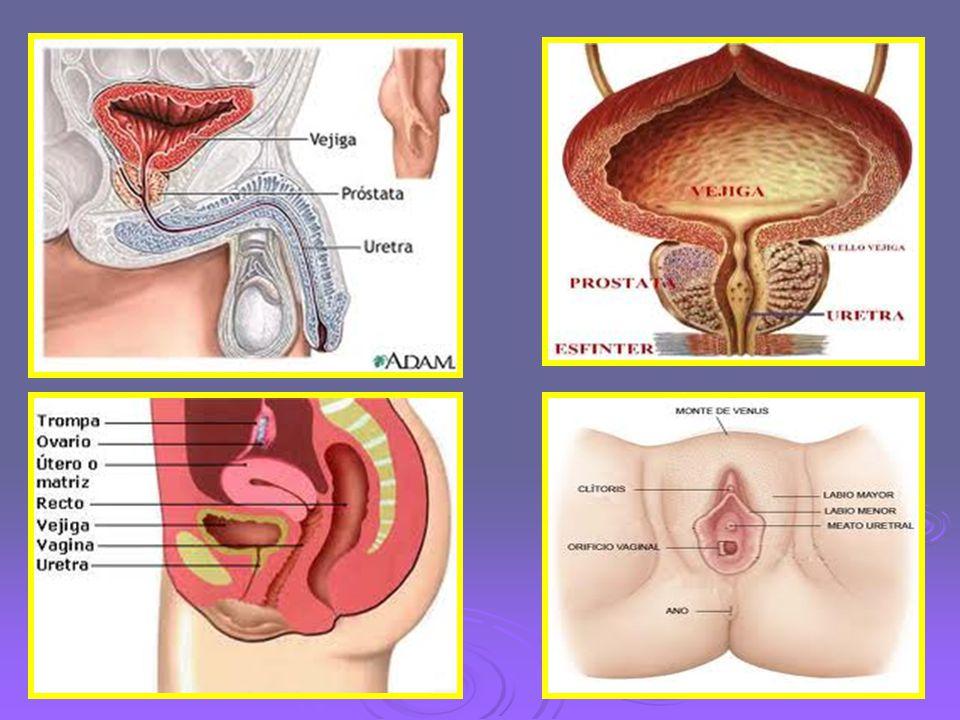 PRINCIPALES INDICACIONES DEL SONDAJE VESICAL:  Vaciar la vejiga en caso de retención urinaria.