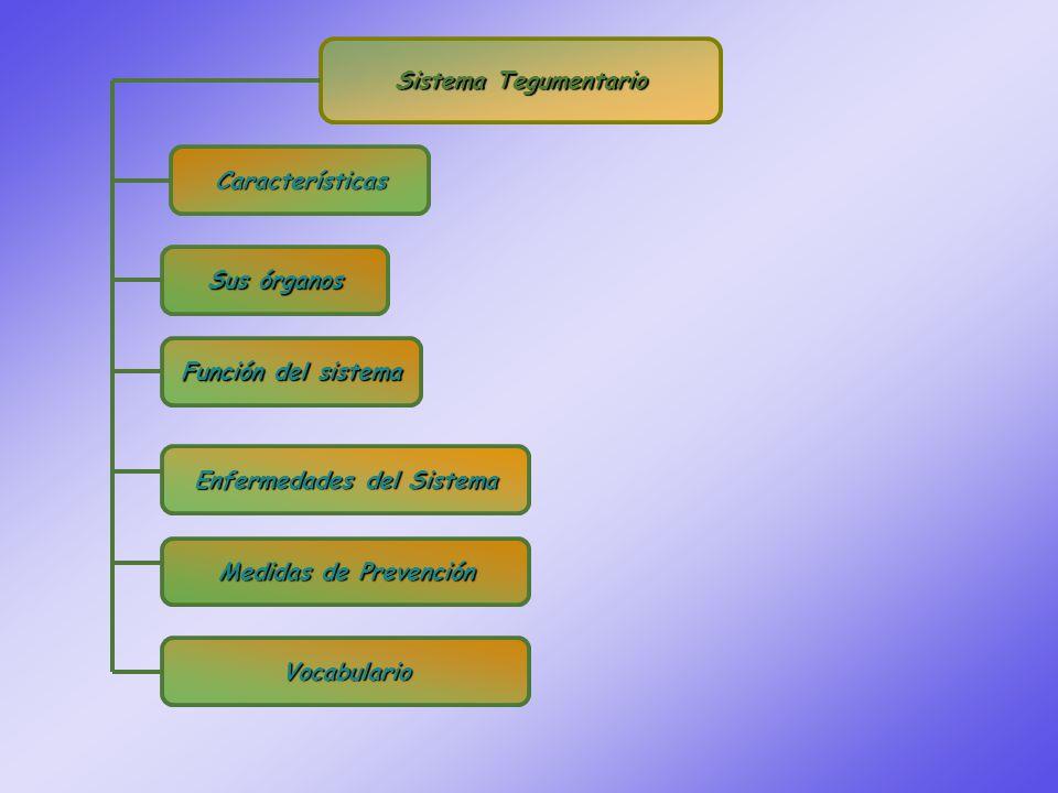 Sistema Tegumentario Características Sus órganos Sus órganos Enfermedades del Sistema Enfermedades del Sistema Medidas de Prevención Medidas de Prevención Vocabulario Función del sistema Función del sistema