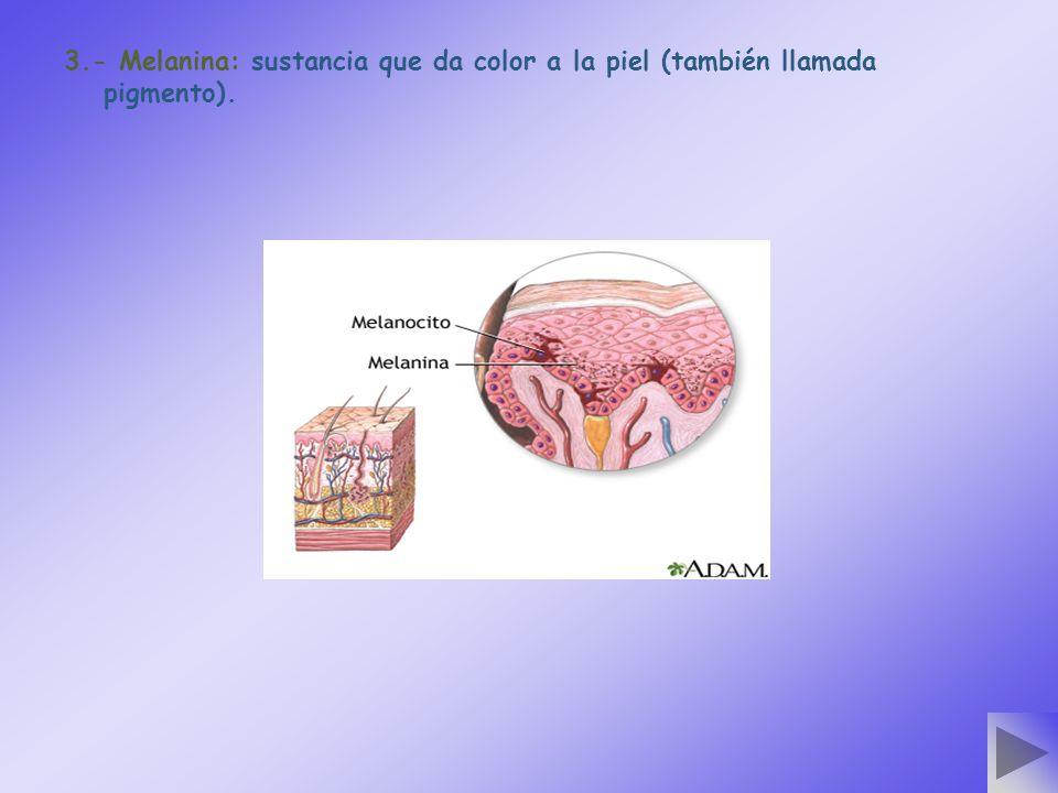 3.- Melanina: sustancia que da color a la piel (también llamada pigmento).