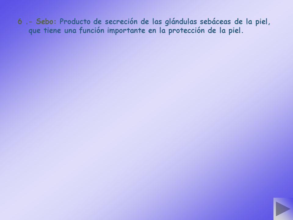 6.- Sebo: Producto de secreción de las glándulas sebáceas de la piel, que tiene una función importante en la protección de la piel.