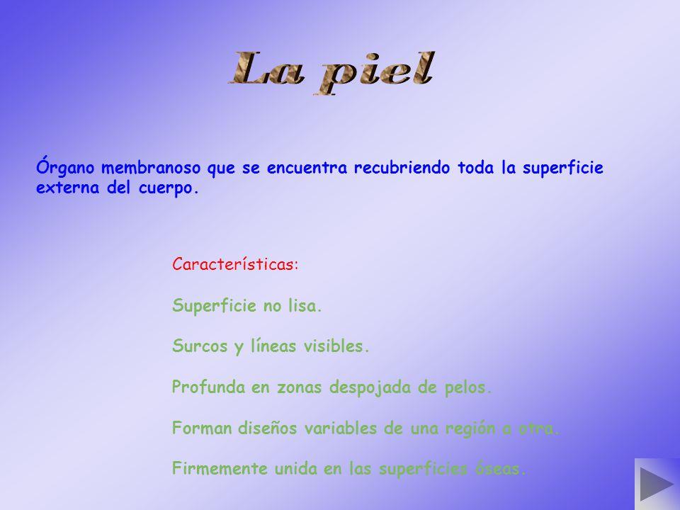 d) Prurito:
