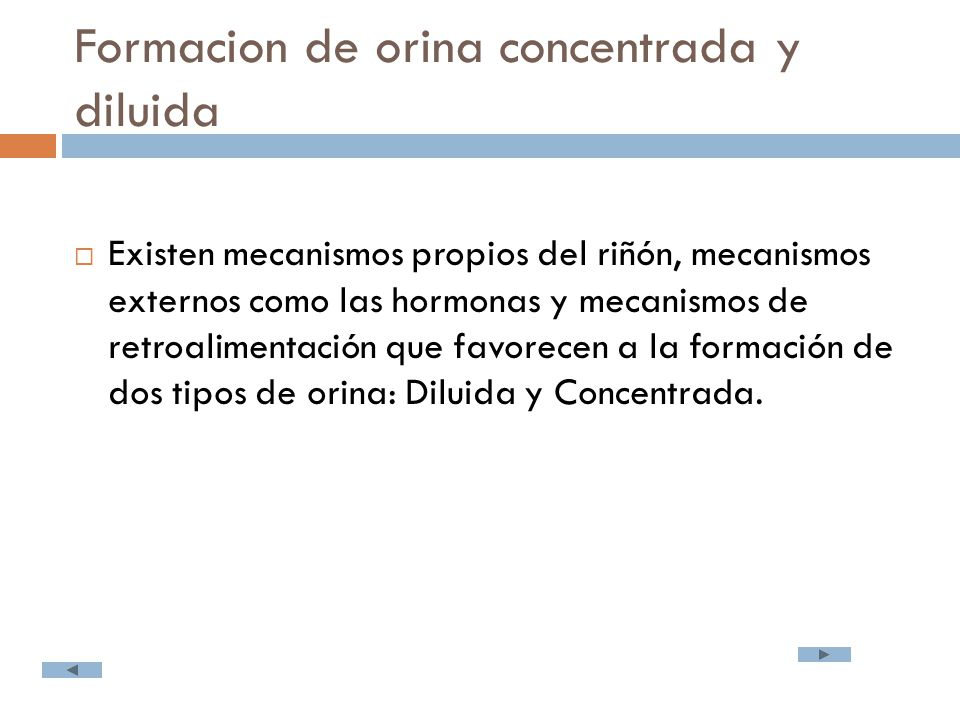 Formacion de orina concentrada y diluida  Existen mecanismos propios del riñón, mecanismos externos como las hormonas y mecanismos de retroalimentación que favorecen a la formación de dos tipos de orina: Diluida y Concentrada.