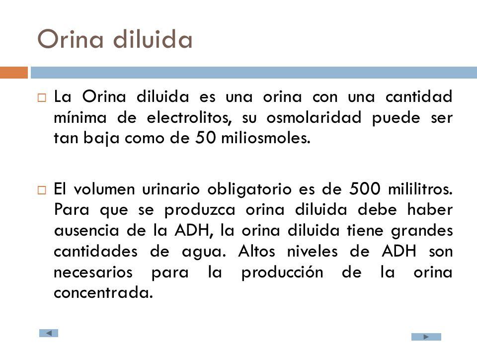 Orina diluida  La Orina diluida es una orina con una cantidad mínima de electrolitos, su osmolaridad puede ser tan baja como de 50 miliosmoles.
