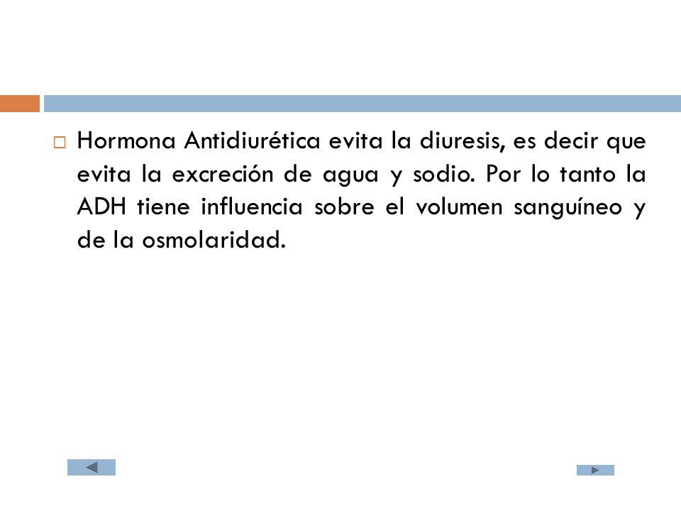  Hormona Antidiurética evita la diuresis, es decir que evita la excreción de agua y sodio.