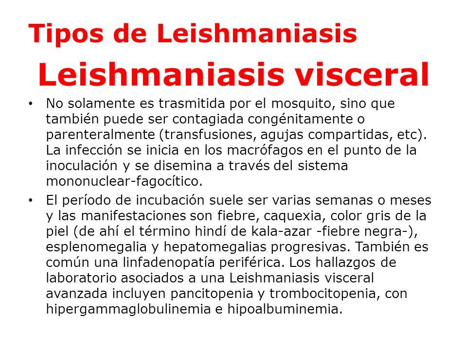 Leishmaniasis cutánea El período de incubación oscila entre semanas y meses.