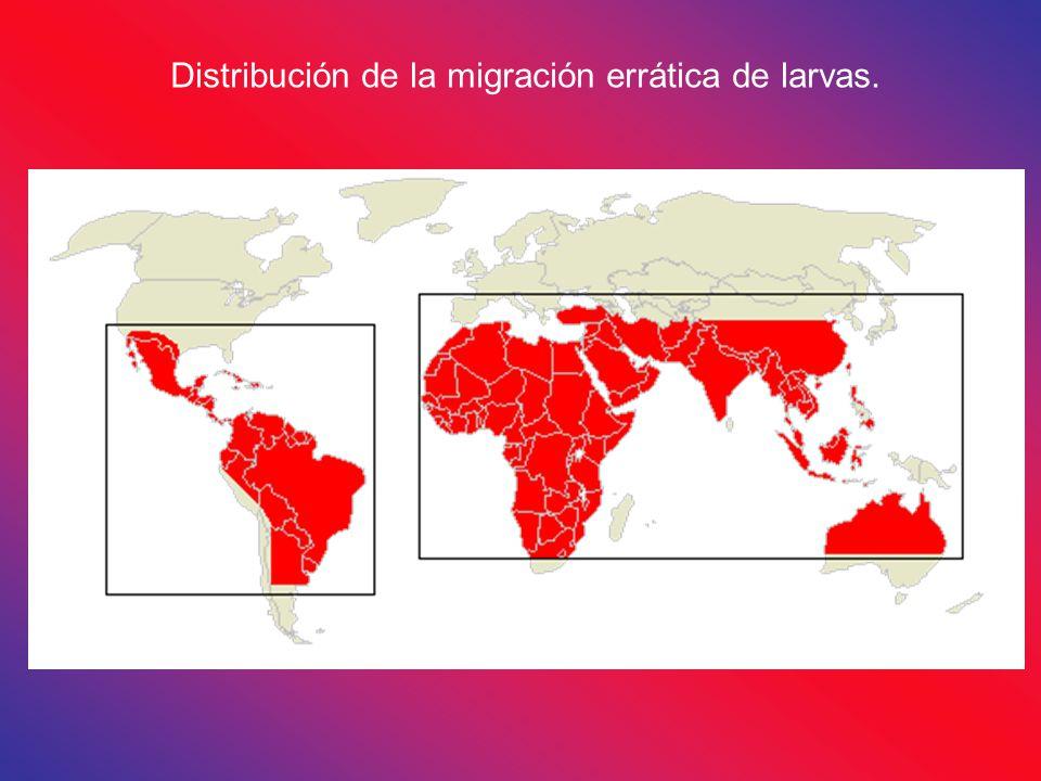 Distribución de la migración errática de larvas.