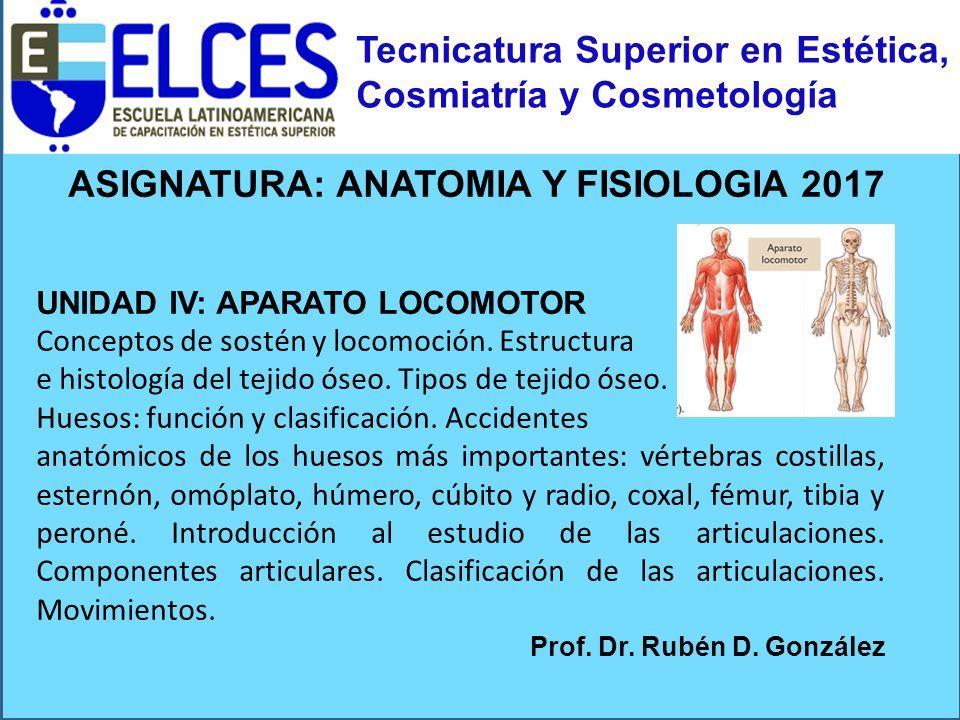 Moderno Tejido Imágenes Anatomía Y Fisiología Molde - Anatomía de ...
