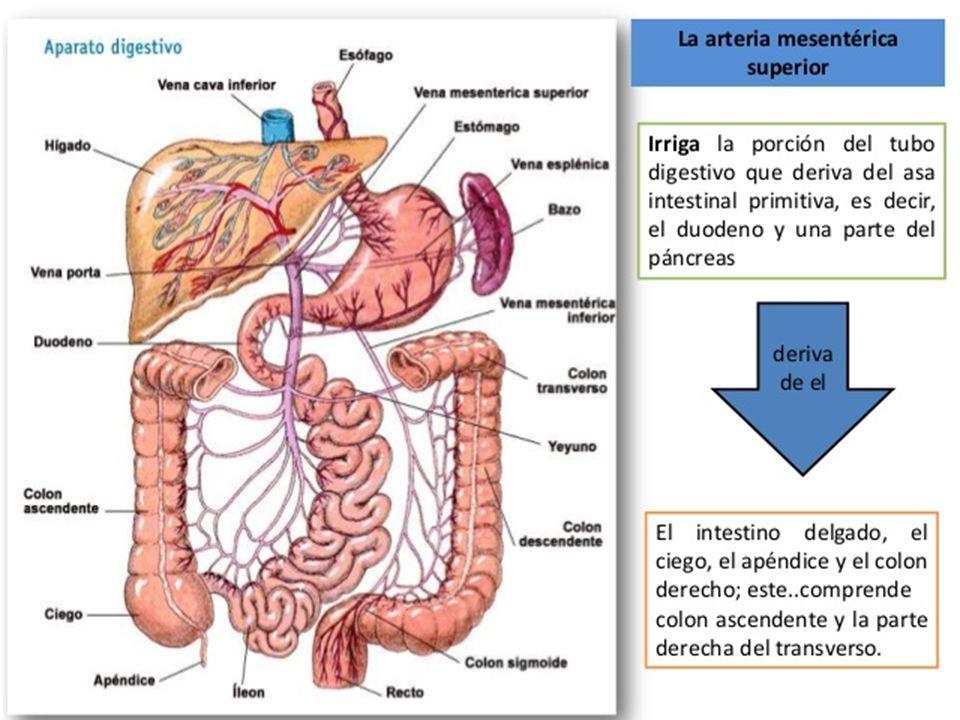 Famoso Anatomía Y Fisiología 2016 Colección de Imágenes - Imágenes ...