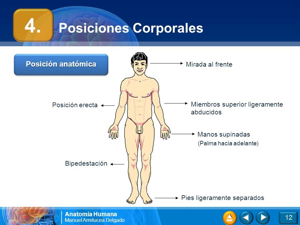 3 2 1 Cargando presentación. Anatomía Humana Introducción Docente ...