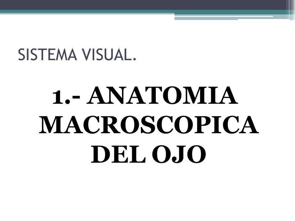 Bonito Sistema De Anatomía Visual Bandera - Anatomía de Las ...