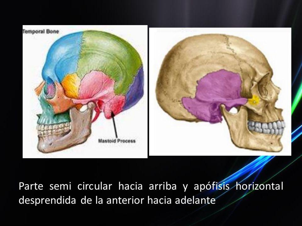 Dorable Anatomía Ct Hueso Temporal Ideas - Anatomía de Las ...